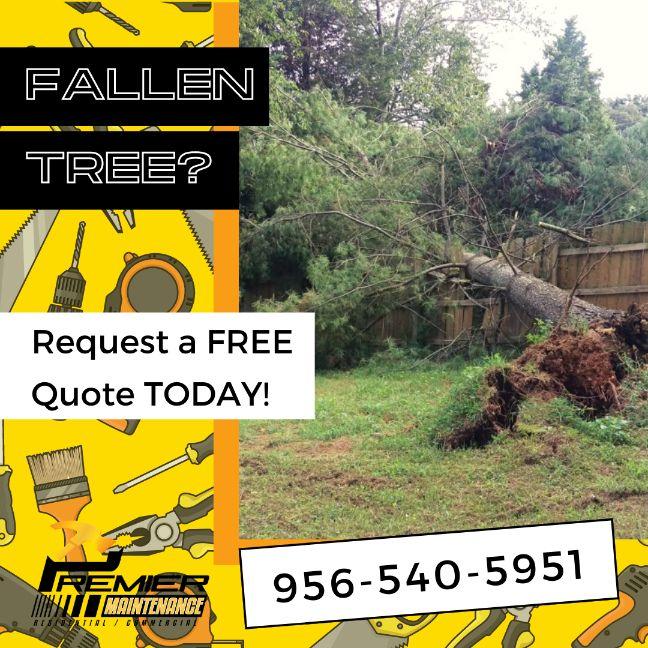 fallen tree mcallen
